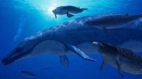 Carcharocles Megalodon vs Basilosaurus Cetoides