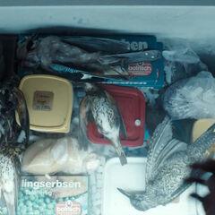 Birds in Charlotte's fridge