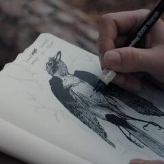 Sketching the bird
