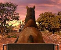 Horsebutt4