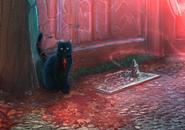 Dp13-black-cat