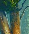 Acorn Symbol Deep Forest