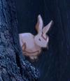 Parable Piece Moon Rabbits1