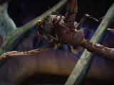 Peeper beetle