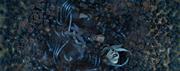 Ordon's death