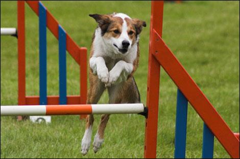 File:Dogs.jpg