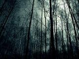 Dark Falls Forest