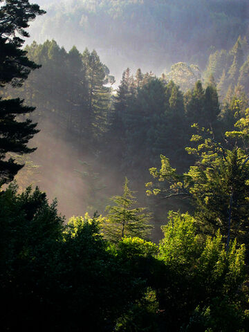 File:Muir-woods-national-monument-mill-valley-ca112.jpg