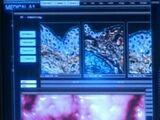 Taurian Alpha Virus