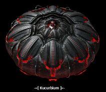 Kucurbium