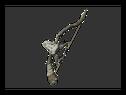 Большой Двухголовый лук