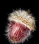 Egg vermifuge