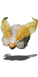 File:Moon Butterfly Hat.png