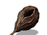 Seed of a Giant Tree