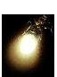 Светящийся жук