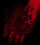 Темная Рука