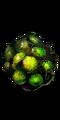 Common Fruit