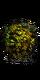 Ядовитый мох