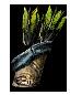 Отравленная стрела (Dark Souls II)