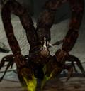 Скорпион Нажка