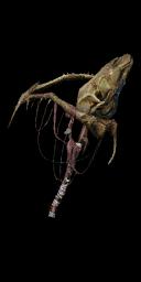 Bone Staff
