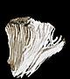 Elizabeth's Mushroom