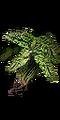 Green Blossom II