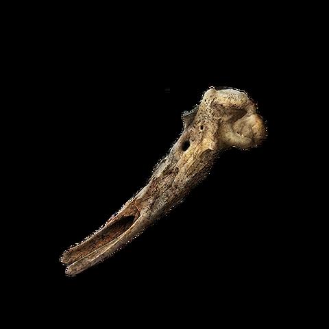 File:Loretta's Bone.png