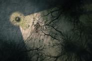 Mushroom - corpse