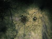 Spider - corpse