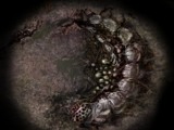 Королева-личинка