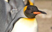 Penguin-726196