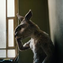 Känguru Pfote aufs Gesicht
