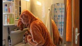 Känguru putzt das Bad