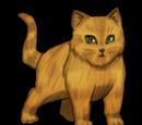 Kittens Quest
