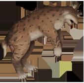 Lynx corpse