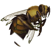Bee soldier corpse
