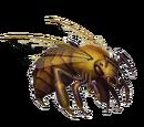 Giant bee worker