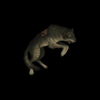 Dead wolf