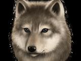 Wolfling Quest
