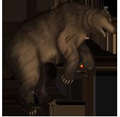Bear corpse