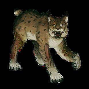 Rad lynx