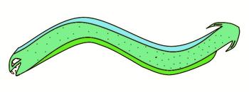 Vineless grass snake complete