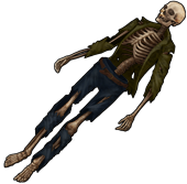 Скелет человека2