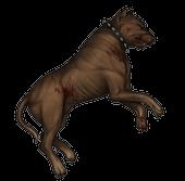 Туша собаки