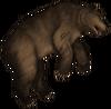 Туша медведя