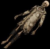 Скелет медика