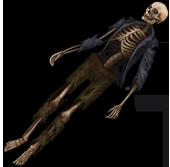 Скелет человека1
