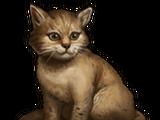 Котята (квест)