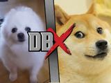 Doge VS Gabe the Dog